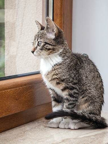 Kitten sitting on window ledge looking out of window